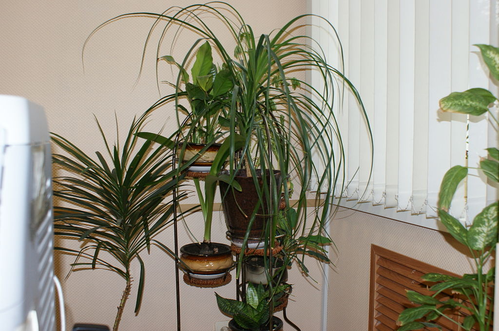 Healthy Plants To Have In Your House