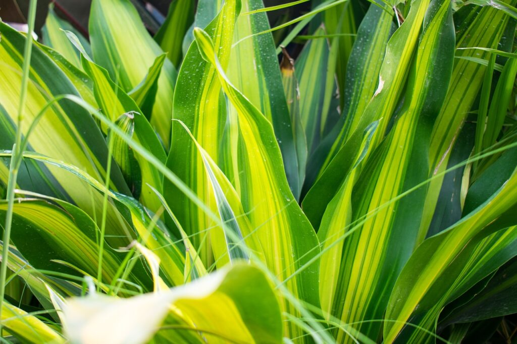 Indoor house plants-better sleep-take care-benefits