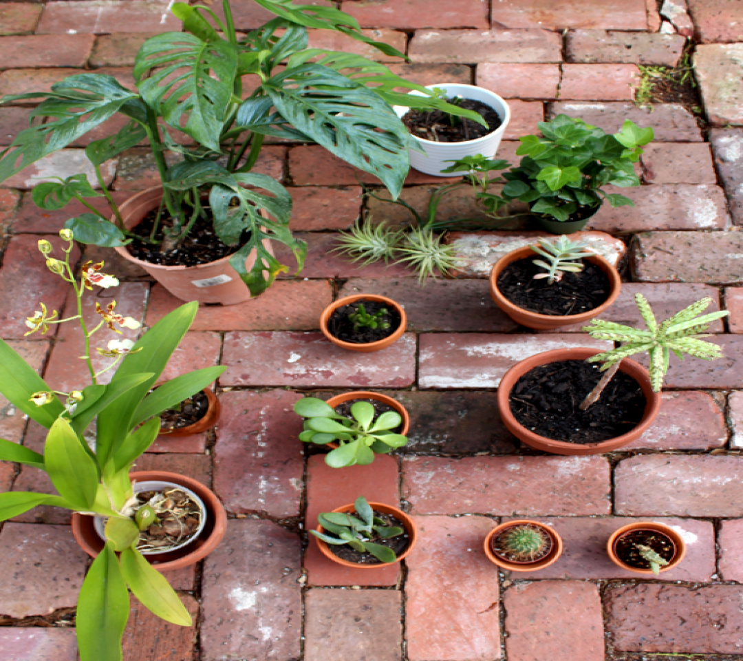 Keep Houseplant Alive:6 Mistakes to Avoid