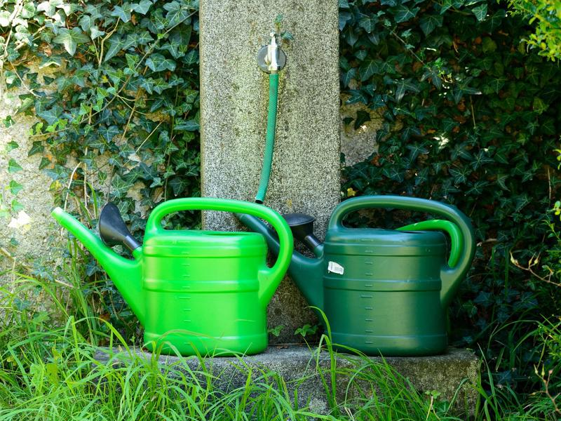 How To Water,The Plants,To Avoid,Death,homeplant,houseplants,watering plants,mistakes