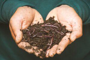 soil-houseplant-alive