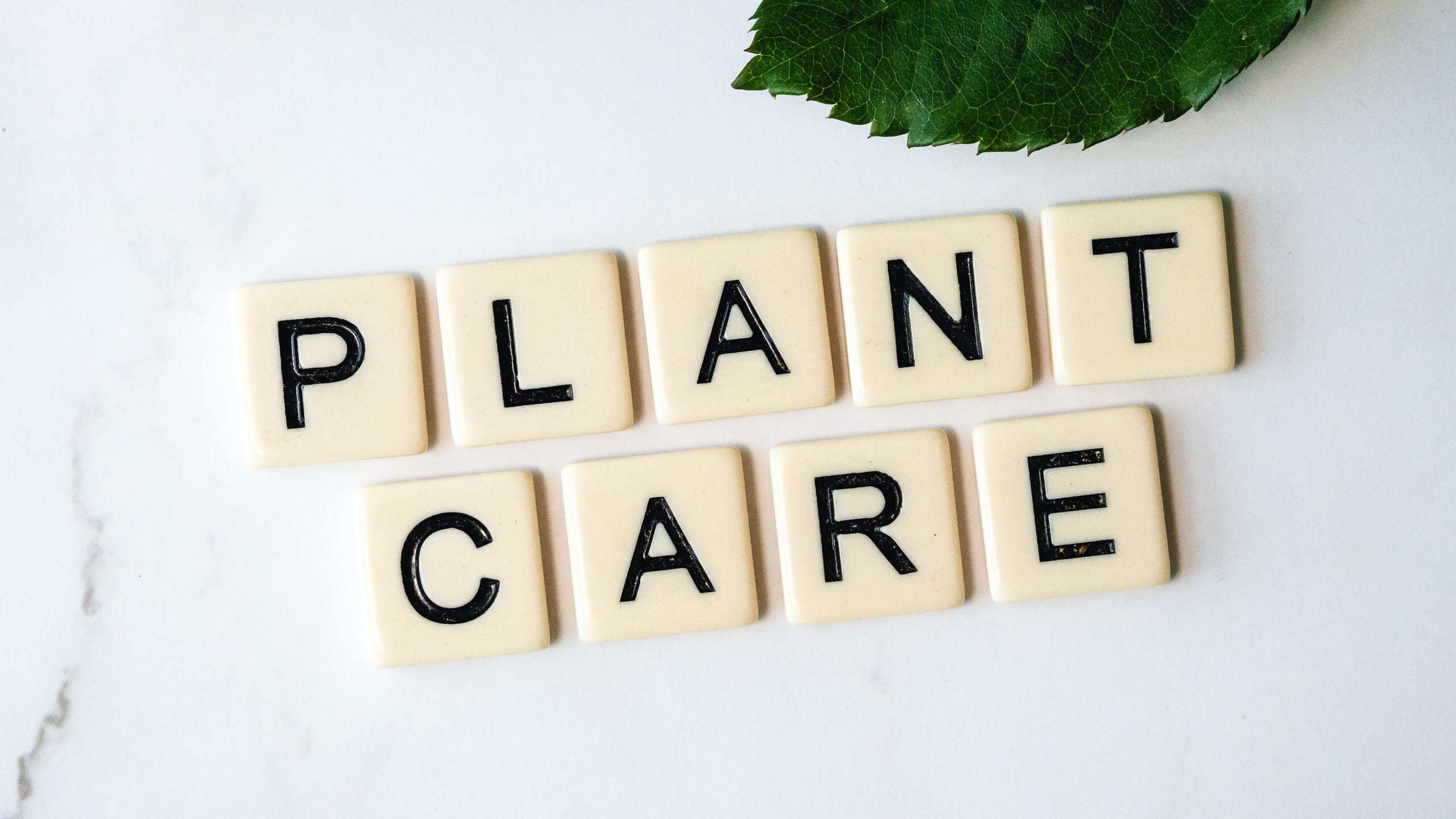 take care-houseplants,indoor plants