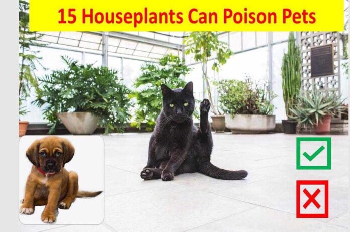 houseplants can poison pets
