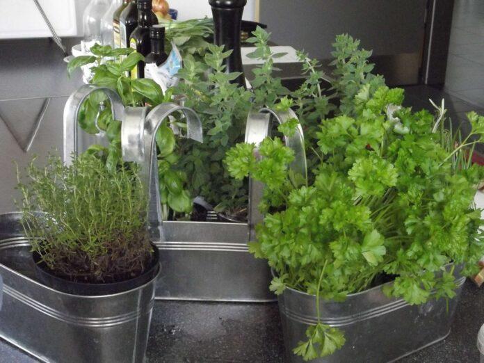 kitchen herbs