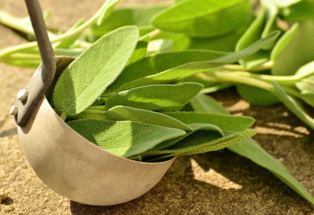 sage, Kitchen Herbs